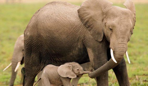 Şimdiki anneler harika!
