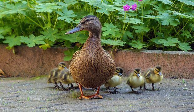 Yeni annelerin doğru sandığı yanlışlar