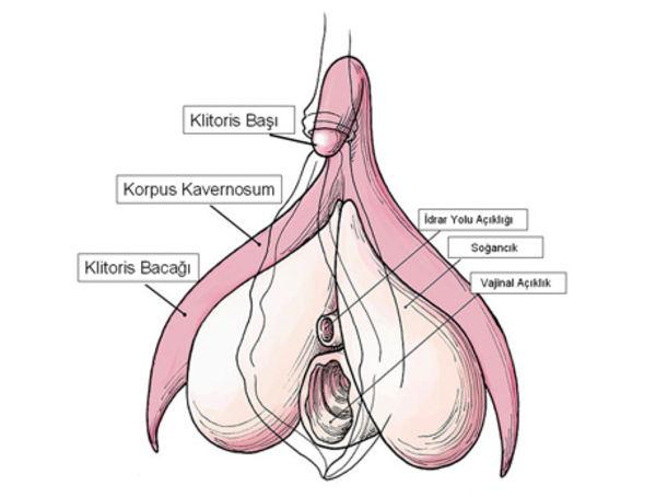 Klitoros