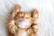 Uyuyamıyorum!