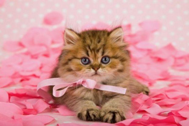 Sevgilinize canlı bir doğum günü hediyesi verin!