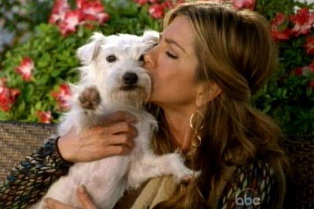 Jennifer Aniston'ın çocuk hayalleri ertelendi tesellisi minik köpeği...