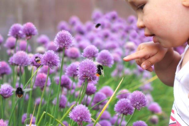 Çocuklarda arı sokmalarında yapmanız gerekenler!