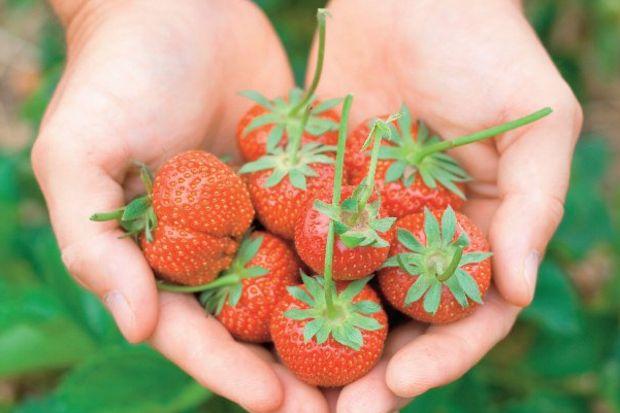 Organik tarımla dünyayı gez!