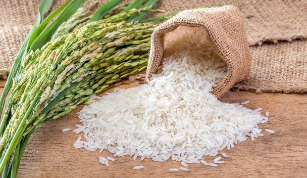pirinç ile ilgili görsel sonucu