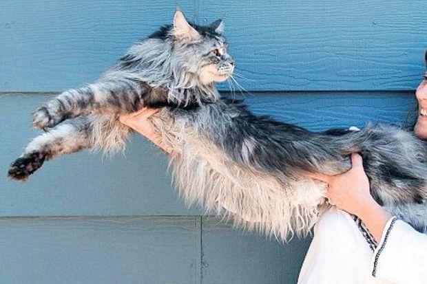 En uzun kedi öldü!