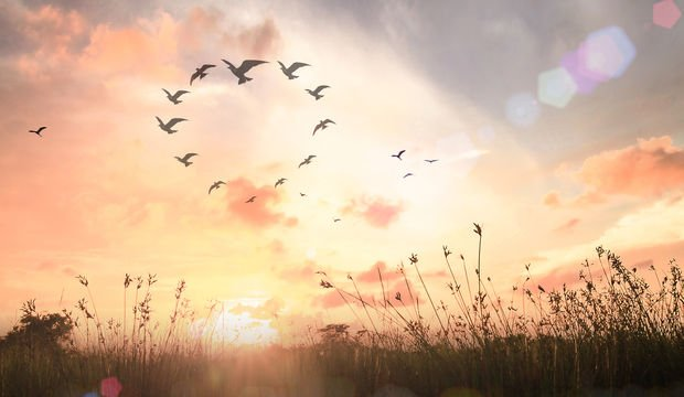 Ruhunuzu rahatlatacak 9 öneri