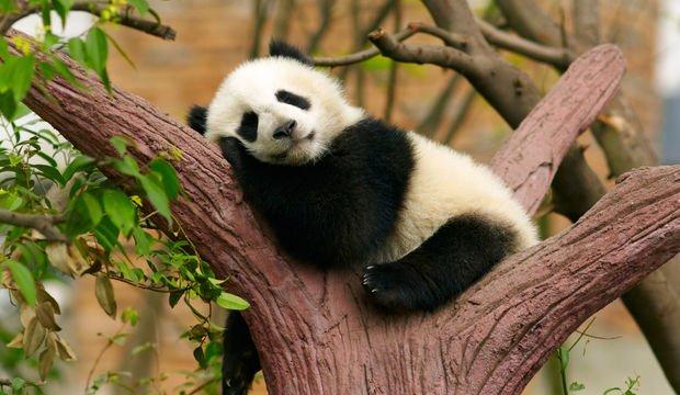 Uyumanıza yardımcı olacak besinler...