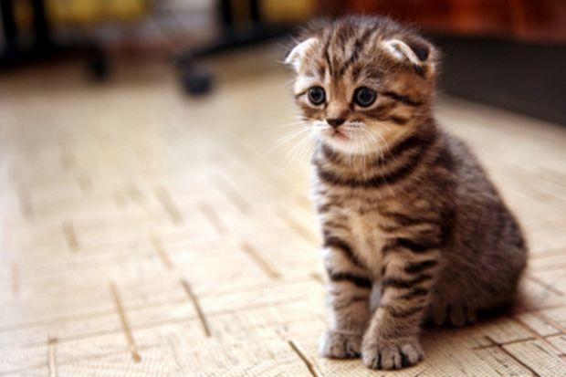 Alerjiye en çok sebep olan evcil hayvan: Kedi!