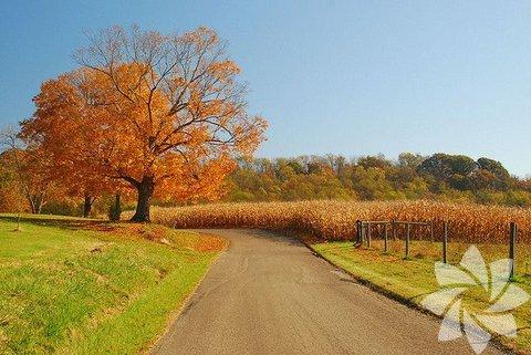 Sonbahar Manzaraları...