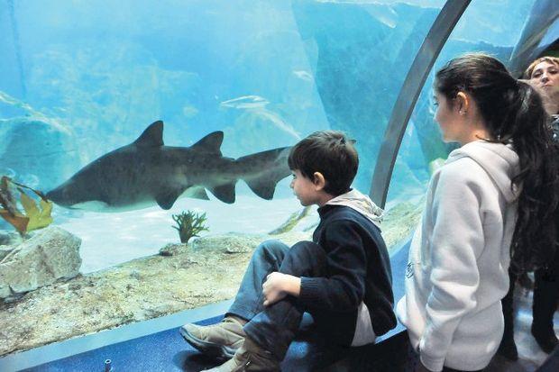 İstanbul Akvaryum bilge çocuk arıyor