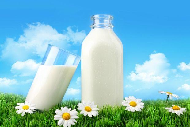 Eşek sütünün faydaları!