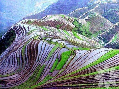Pirinç Tarlası, Çin