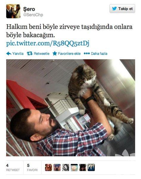 Sosyal kedi Şero'nun tweet'leri