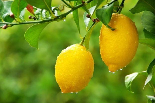 Nasırlara limonlu çözüm