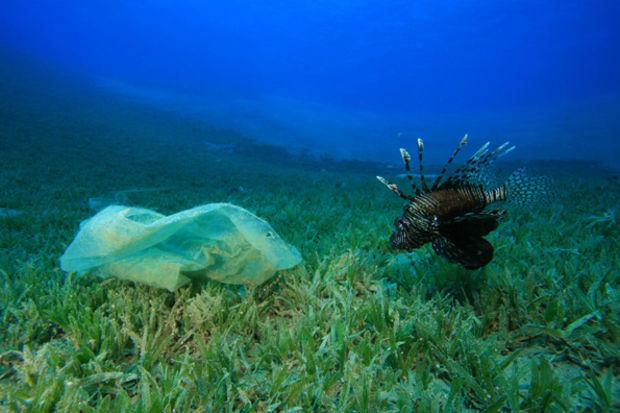 Plastik atıklar sağlığımızı böyle tehdit ediyor!