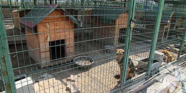 Eski battaniye ya da havlularınızı hayvan barınaklarına bağışlayın.