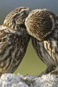 Öpüşmek hakkında bilmediğiniz 9 şey