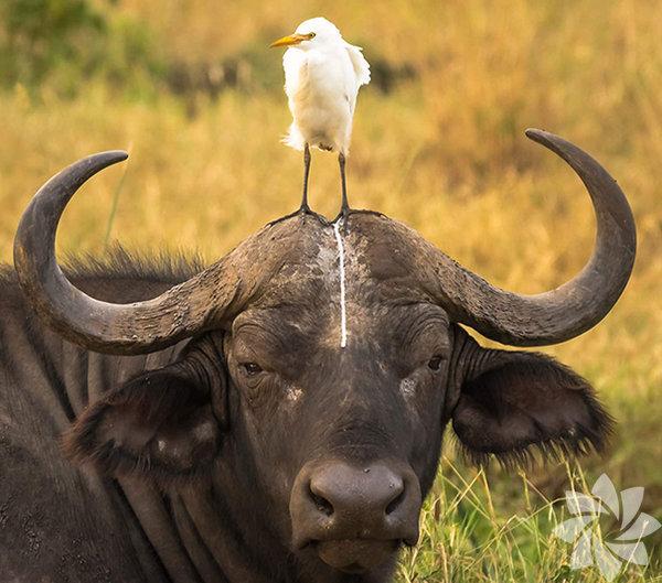 Komik hayvanlar