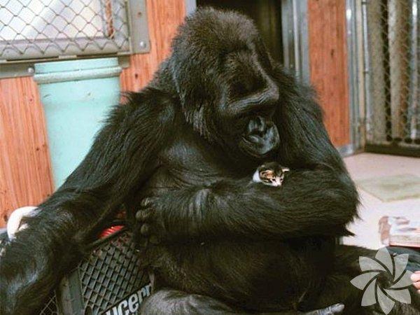 Hayvan dostlukları...
