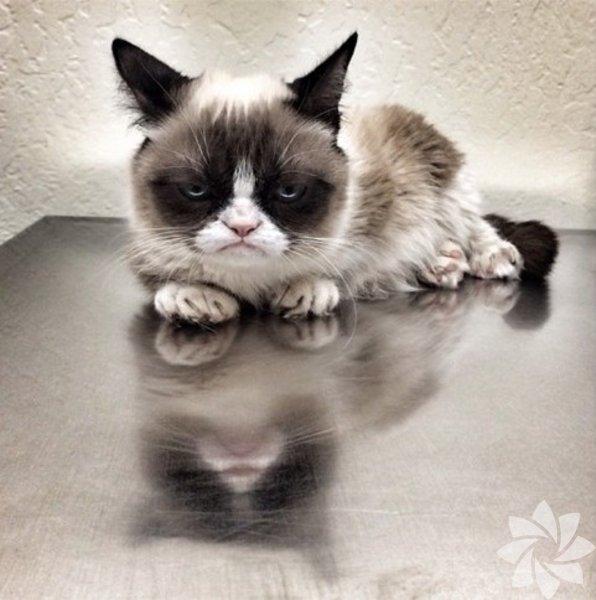 İsim: Grumpy CatInstagram adı: realgrumpycatTakipçi: 173,172 Bu huysuz kedi bir anda viral oldu. Artık herhangi bir reklam, afiş veya caps'de rastlayabiliyoruz ona. O artık içimizden biri. Bir kediye huysuzluk ve sefillik bu kadar yakışabilir.