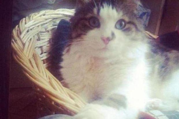 Kedileri daha çok solcular mı sever?