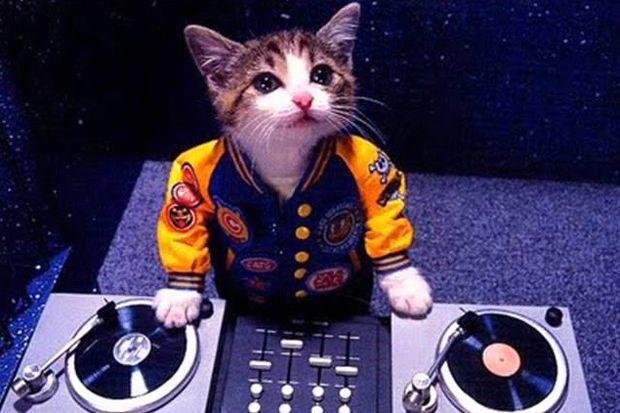 DJ kedi sosyal medyayı salladı