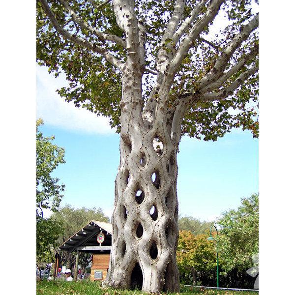 Bu ağaçları görünce çok şaşıracaksınız!