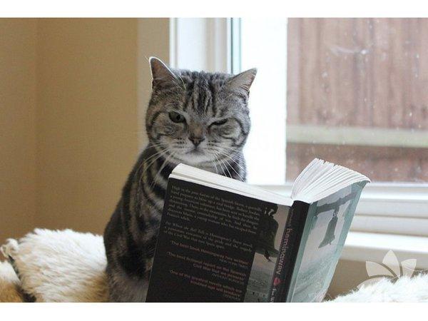 Kitap okuyan kediler...