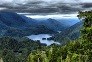 Yağmur ormanlarının bilinmeyen özellikleri