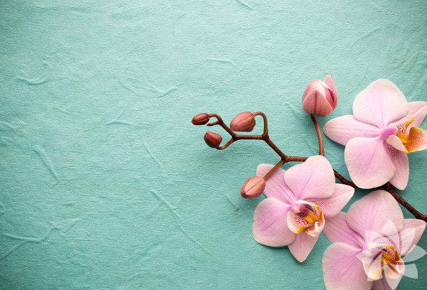 Öncelikle orkidelere uygun, köklerinin de ışık alabileceği şeffaf bir saksı seçilmelidir.