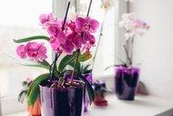 Orkide bakımı hakkında bilmedikleriniz...