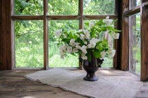 Bu çiçekler evinize şans getirecekler!