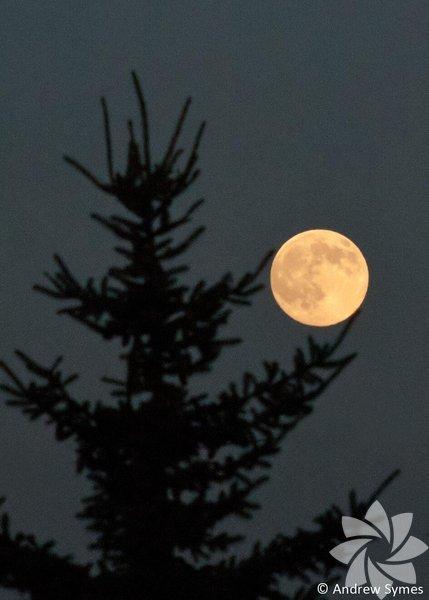 Dolunay, Ay'ın Güneş'e göre Dünya'nın ters tarafında kaldığı evresidir.  Fotoğraf: Andrew Symes