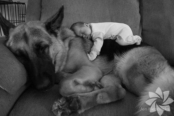Bebeklerle köpeklerin dostluğu...