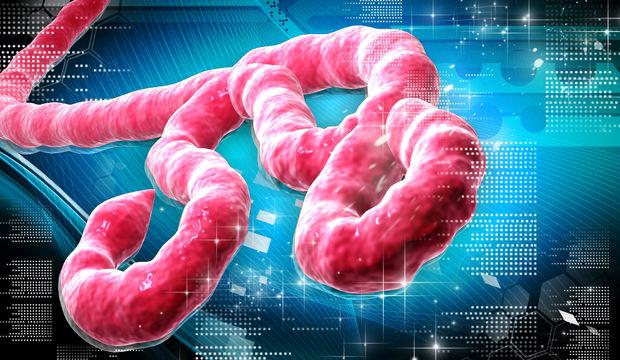 Ebola virüsü hakkında bildiklerimiz ve bilmediklerimiz!