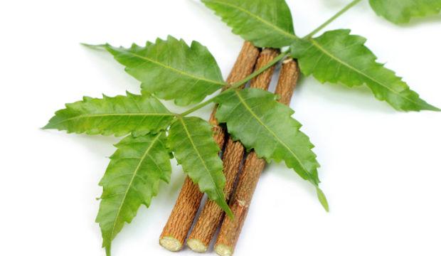 Binlerce yıldır güzellik vaat eden neem ağacı