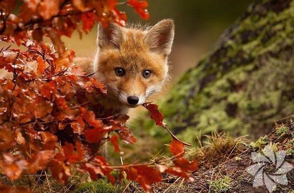 Sonbahar büyülü bir mevsim...