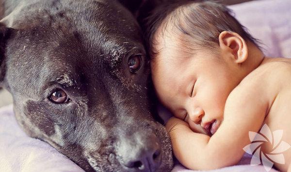 Bebekler ve köpeklerin mükemmel dostluğu