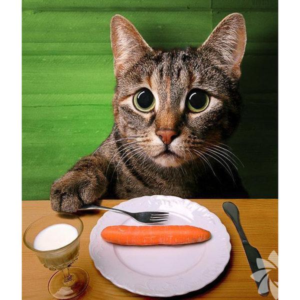 """1) Sürekli aç olan kedi Karnınız daima aç mı? Yemekten iki üç tabak daha mı alıyorsunuz? Farklı tatlar denemek için dünyayı dolaştınız, asla tatmin olmadınız ve daha fazlasını mı istiyorsunuz? O halde sürekli aç olan kedi karakterine sahip olabilirsiniz. Bu karakter """"gurme"""" stereotipi içerisine girer ve bunda hiçbir sorun yoktur!"""