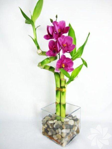 Bambular sevdiklerinize şans getirir.