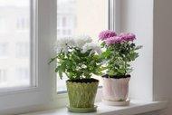 Feng Shui'ye göre çiçeklerin anlamları
