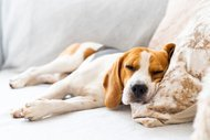 Yorgunluğa karşı altın değerinde 10 formül