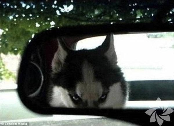 """""""Beni kandırdın, veterinere götürüyorsun öyle değil mi?"""""""