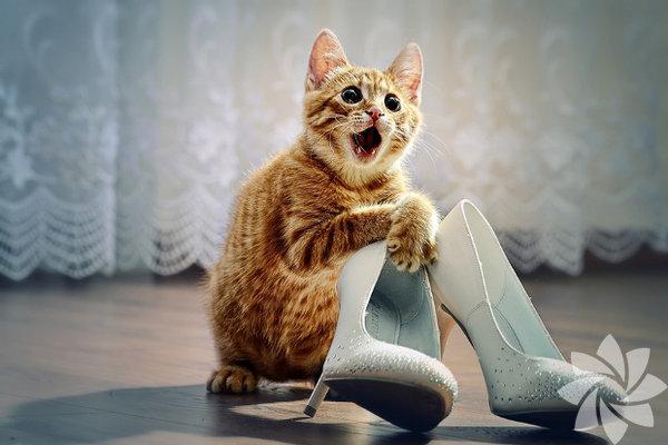 Moda, uyum, şıklık yarışı içerisinde topuklu ayakkabı üzerinde geçirilen uzun saatlerin ayak sağlığınız üzerindeki etkisi ise oldukça ciddi boyutta. Okan Üniversitesi Fizik Tedavi ve Rehabilitasyon Bölümü'nden Yrd. Doç.  Dr. Gamze Şenbursa, yüksek topuklu ayakkabıların kadınlarda ortaya  çıkardığı rahatsızlıklar hakkında önemli bilgiler verdi: