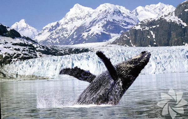 Dev balinaları fotoğraflayın  Alaska  Doğasıyla huzur veren Alaska'ya iç dünyanızı keşfetmek için gitmeye ne dersiniz? Alaska'daki yoga kurs ve turlarına katılarak buzulların karşısında yoga yapabilirsiniz. Kendi iç dünyanızdan sonra da balinaları keşfetmeye gidebilirsiniz. Eğer bunları yapabilecek kadar maceraperestseniz bir tura bağlı kalmak yerine karavan kiralayıp kendi turunuzun tadını çıkarın.