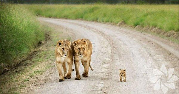 Sevimli hayvan aileleri...