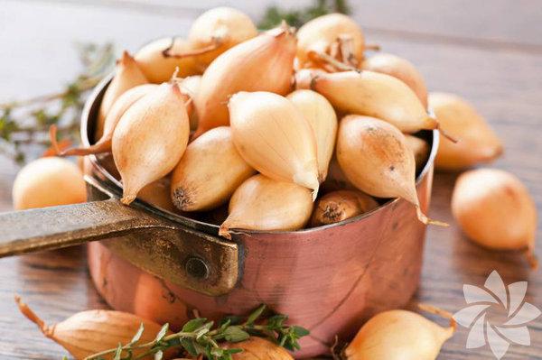 A, C vitaminleri ile demir, kalsiyum, potasyum içerir. Vücudu korur.