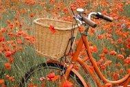İstanbul'daki bisiklet rotaları