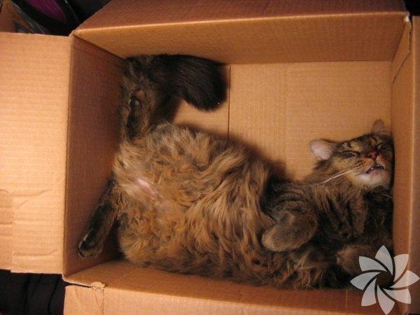 Kedi sahibi olanlar bilir, onları olmadık yerlerde acayip şekillerde uyurken görebilirsiniz! Uyuyan kediler